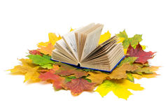 Book and maple leaves on white background. Open book and autumn maple leaves isolated on white background Royalty Free Stock Images