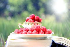Book on nature. A cup of raspberry standing on the dark blue book. Harvest of raspberry Stock Photo