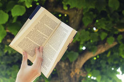Book in nature. Hand holding and reading book in nature Stock Photo