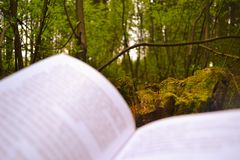 Book and nature. An open book lies in the woods revealing to us a beautiful view Royalty Free Stock Photography