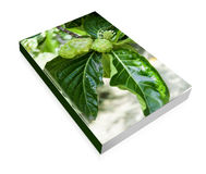 Book a  noni fruit Stock Image