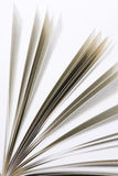 Book pages. On white background close-up Stock Image