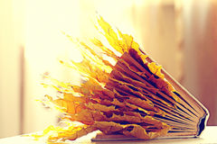 Book pages. Yellow leaves of autumn concept Royalty Free Stock Photos