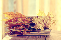 Book pages yellow leaves Royalty Free Stock Images