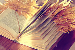 Book pages yellow leaves Stock Image