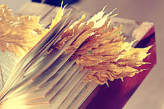 Book pages yellow leaves Stock Photography