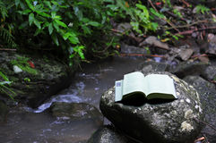 Book in rainforest. Image of a reading book in a tropical rainforest in the Philippines for preservation of our forests Stock Photos