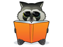 Book Reading Racoon Royalty Free Stock Photo