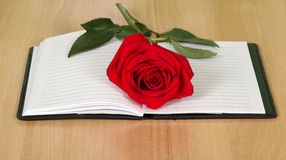 Book with a red rose Royalty Free Stock Image