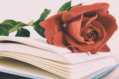 Book and red rose on pages of book on white background Royalty Free Stock Image