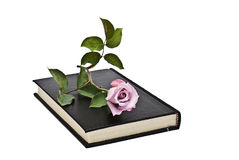 book rose Royaltyfria Foton