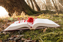 Book and rose Stock Photo