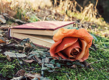 Book and rose Stock Images