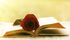 Book with rose Royalty Free Stock Image