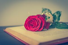 Book and rose. Book and a rose on the table Royalty Free Stock Image