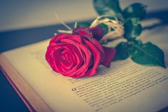Book and rose. Book and a rose on the table Stock Photos