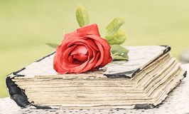 Book and rose Stock Image