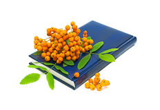 Book and rowan berries on a white background. Rowan berries cluster lies on the book isolated on white background Royalty Free Stock Photo