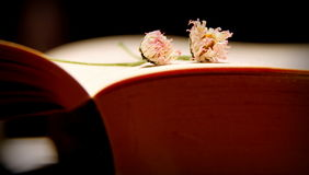 Book time. Still lif with book and twoo daisies Royalty Free Stock Photography