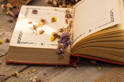 Book to write notes with dried flowers. Stock Photos