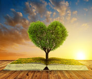 Book with a tree in the shape of heart at sunset. Royalty Free Stock Images