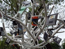 Book tree ,summer outdoor activity Stock Images