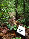 Book in tropical rainforest Royalty Free Stock Images