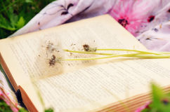 Book and white dandelion flowers Royalty Free Stock Images