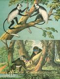 The world of animals in the wild. From the book: The world in pictures: St. Petersburg 1874 Stock Image