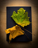 Book and yellow leaves Royalty Free Stock Photography