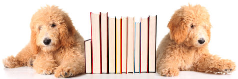 Bookend puppies Royalty Free Stock Photo