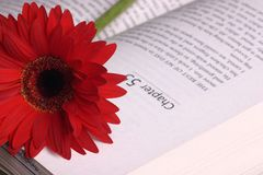 Bookmark. Sunflower bookmark royalty free stock image