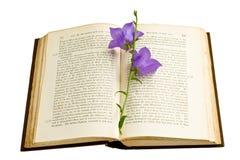bookmark bluebell Стоковая Фотография RF