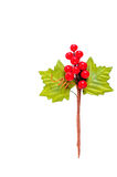 Bookmark twigs and berries Stock Image