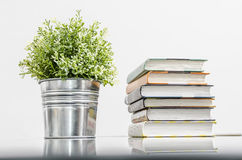 Books and flower. In a pot on the shelf Stock Photography