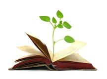 Books gammal tappning med växten som växer från den Royaltyfri Bild
