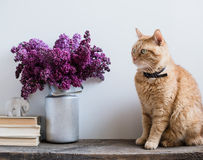 Books and ginger cat Royalty Free Stock Photos