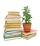 Books and a green plant (Crassula) Royalty Free Stock Photography