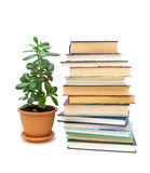 Books and green plant isolated on white background Stock Photography
