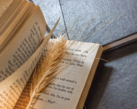 Books. Leather cover books and grain ,abstract reading concept Stock Images