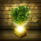 Books with magical green tree and rays of light Stock Image