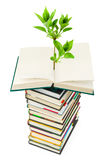Books and plant Royalty Free Stock Images