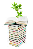 Books and plant Royalty Free Stock Photography