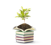 Books with plant Stock Photo