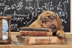 Books and puppy Royalty Free Stock Images
