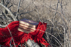 Books on a red shawl on a fallen tree Stock Photos