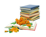 Books and rowan berries on a white background. Open book, a stack of books and a bunch of rowan berries on a white background Stock Images