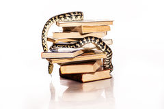 Books and a snake on a white background. Education and wisdom in the form of a stack of books and a beautiful snake on a white background royalty free stock photography