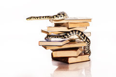 Books and a snake on a white background. Education and wisdom in the form of a stack of books and a beautiful snake on a white background stock photos