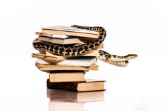 Books and a snake on a white background. Education and wisdom in the form of a stack of books and a beautiful snake on a white background stock photography